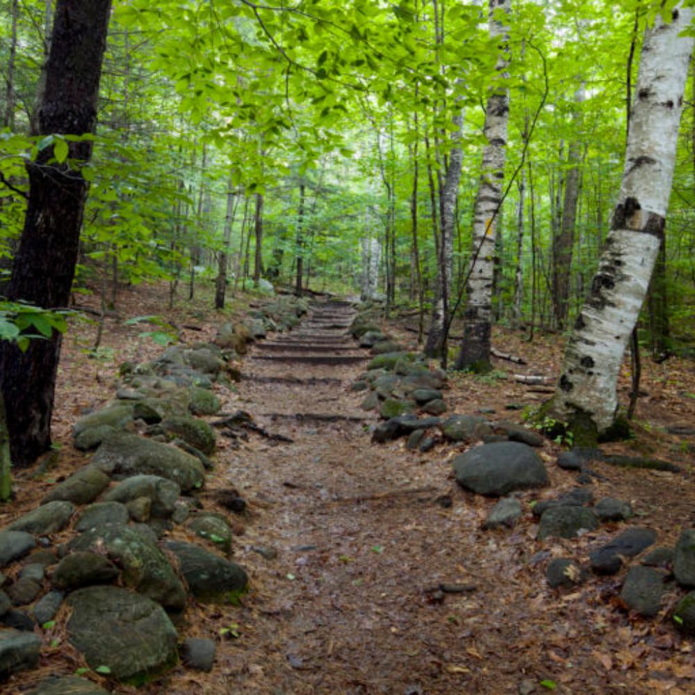West Rattlesnake - Bridle Trail Lot Area